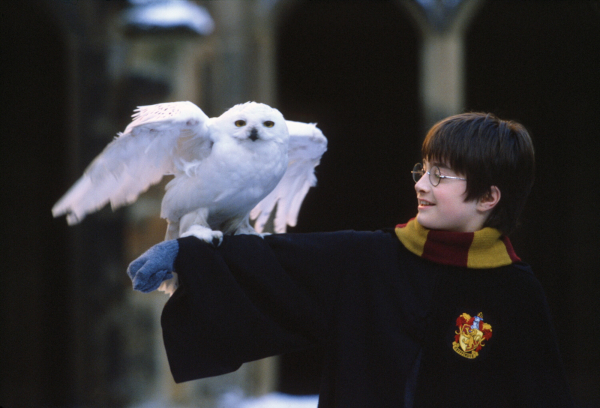 harry potter facts 12