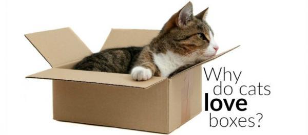 catlovebox 1