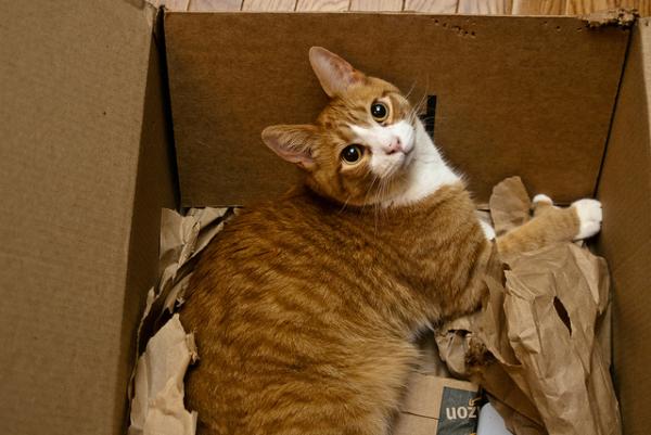 orange cat staring out of box1