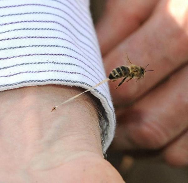 honeybeee