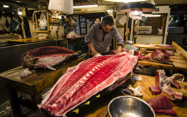 tsukiji fish market tuna nathan vennekens1