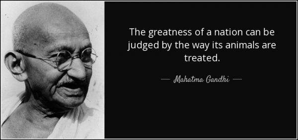 quote the greatness of a nation can be judged by the way its animals are treated mahatma gandhi 10 58 36
