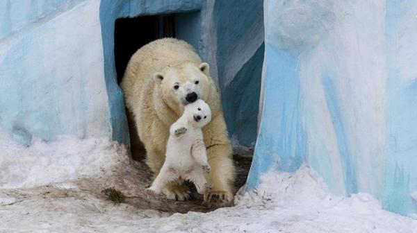 30 photos showcasing human parenting and animal parenting moments 1