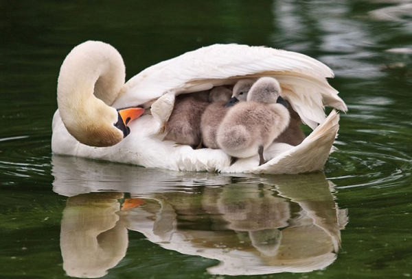 30 photos showcasing human parenting and animal parenting moments 11