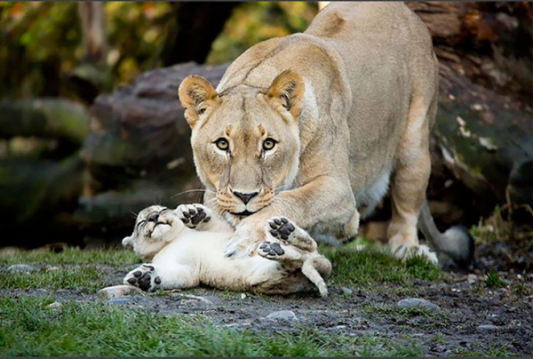 30 photos showcasing human parenting and animal parenting moments 12