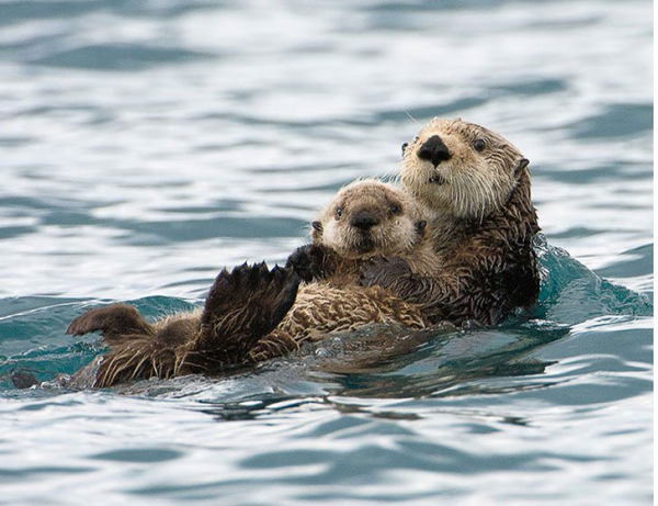 30 photos showcasing human parenting and animal parenting moments 4