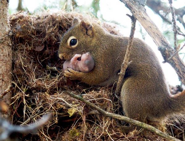 30 photos showcasing human parenting and animal parenting moments 8