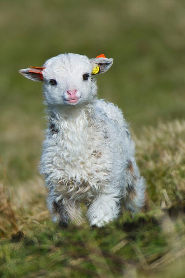 7183710 cute baby animals 32 0230524001540361699 728 a647ac9c4f 1541164176