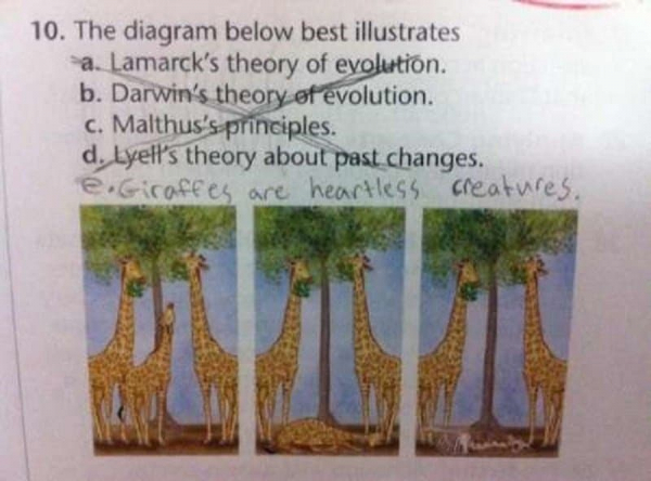 10 of the funniest exam answers youll ever see 4