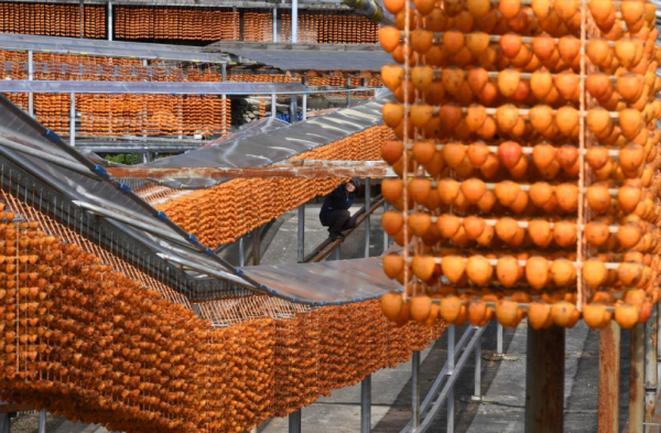 hoshigaki dried persimmons 1