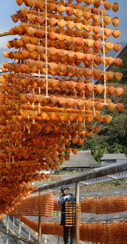 hoshigaki dried persimmons 2