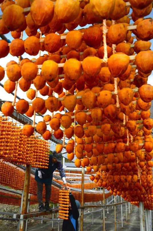 hoshigaki dried persimmons 3