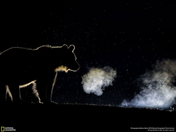 national geographic nature photographer of the year 2018 winner 73 5c0a361488cf3 880