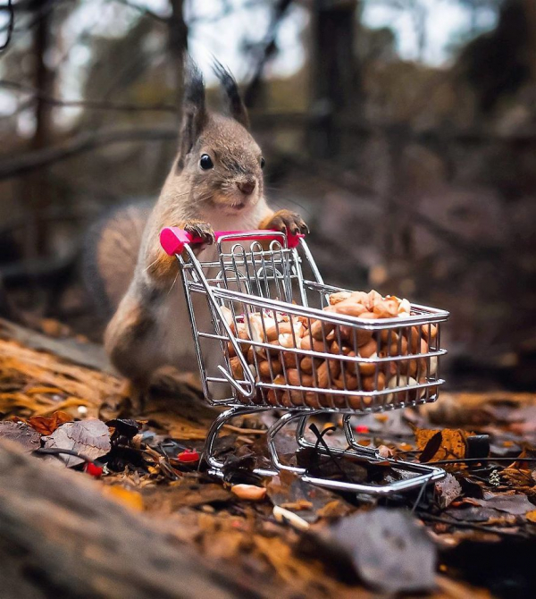 finnish photographer proves fairy forests are real in finland 5c067e61e6d66 880
