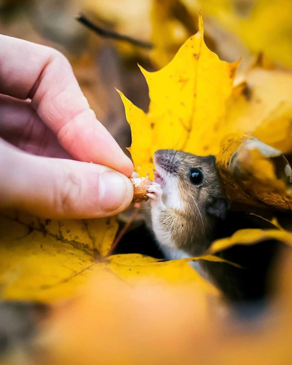 finnish photographer proves fairy forests are real in finland 5c067e6c52e0a 880