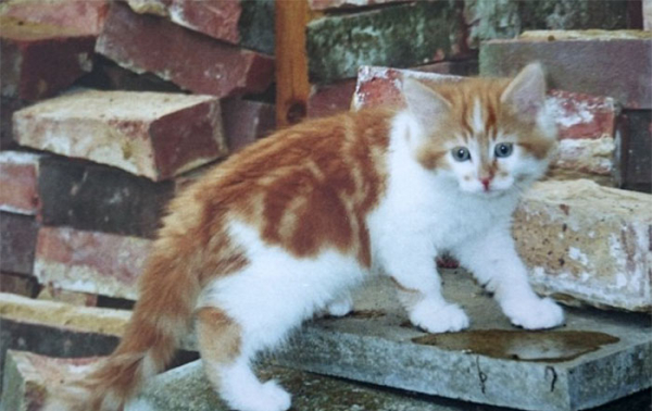 worlds oldest cat rubble 30th birthday michele heritage britain 14 5b1520b19cd7a 700