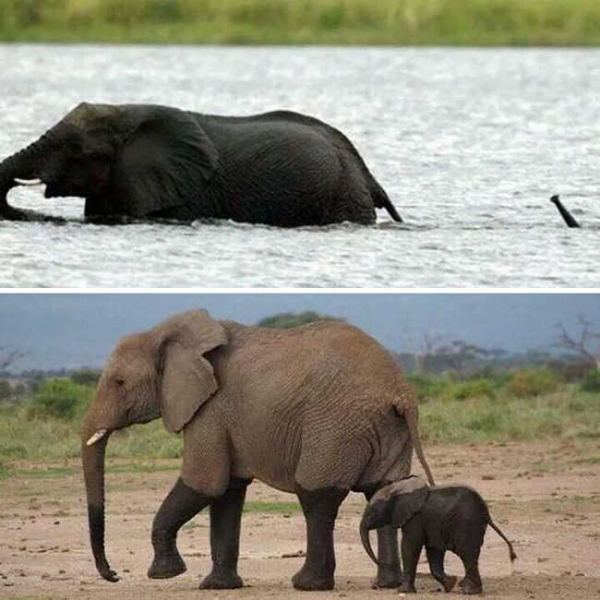 these 10 adorable photos of baby elephants are treat for the eyes 1