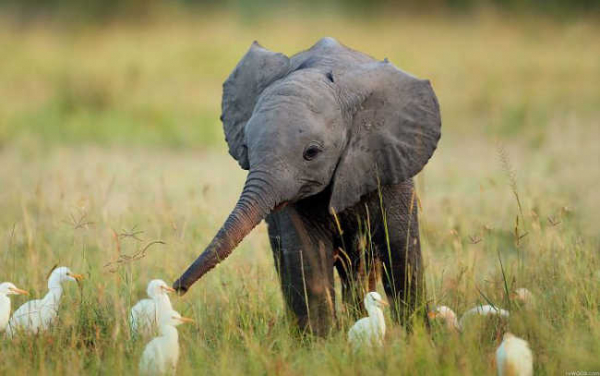 these 10 adorable photos of baby elephants are treat for the eyes 3