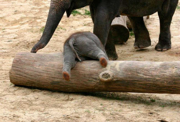 these 10 adorable photos of baby elephants are treat for the eyes 4