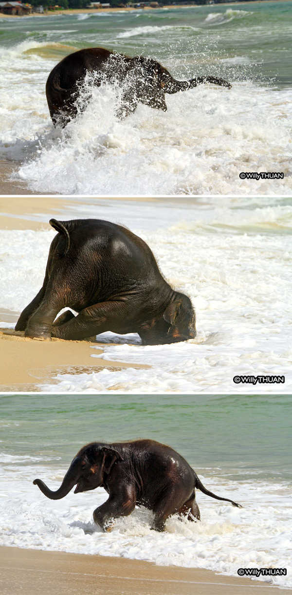 these 10 adorable photos of baby elephants are treat for the eyes 5