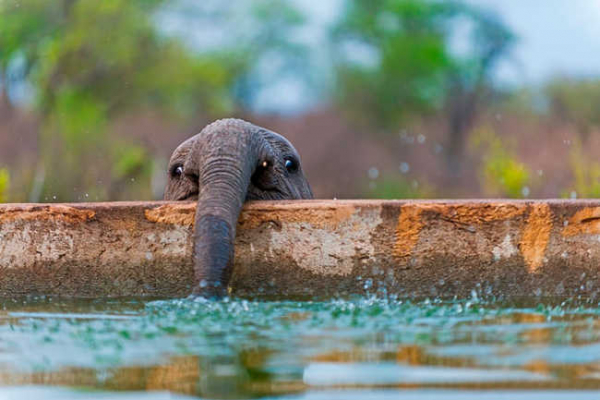 these 10 adorable photos of baby elephants are treat for the eyes 8