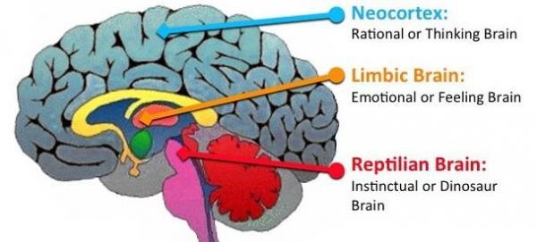 tan vo nao neocortex ca heo