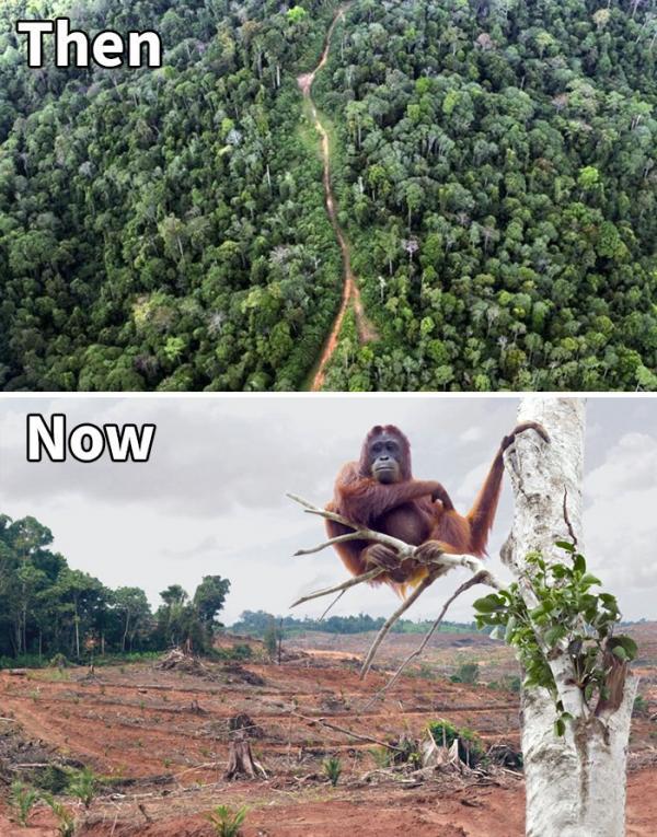 sad 10 year challenge nature memes 42 5c487aa34c9e8 700