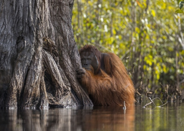 nhung buc anh national geographic nature photographer of the year anh1