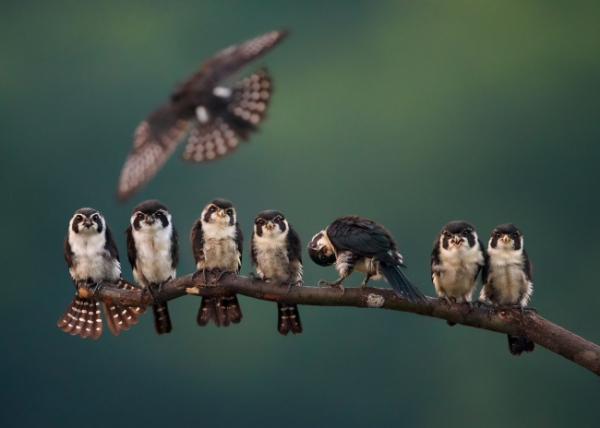 nhung buc anh national geographic nature photographer of the year anh12
