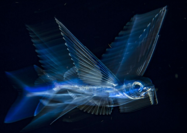 nhung buc anh national geographic nature photographer of the year anh14