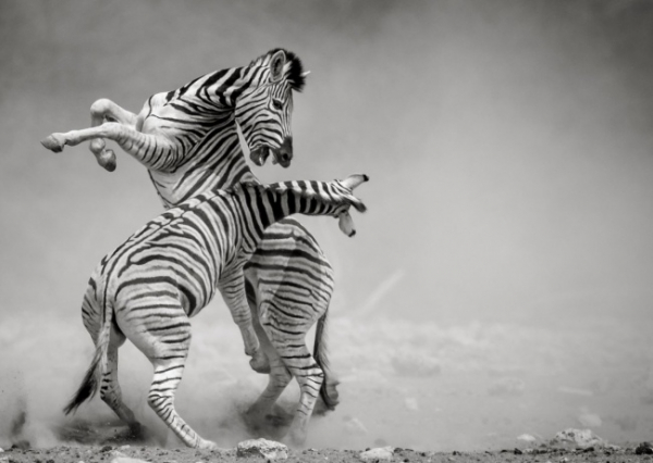 nhung buc anh national geographic nature photographer of the year anh19