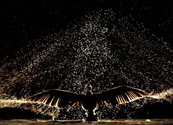 nhung buc anh national geographic nature photographer of the year anh22