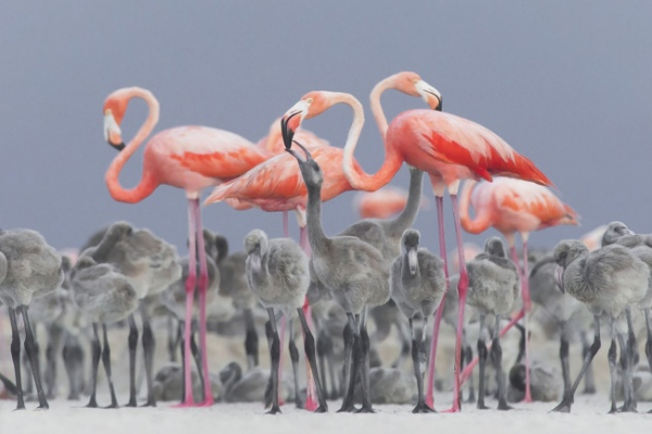 nhung buc anh national geographic nature photographer of the year anh3