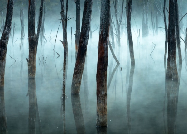 nhung buc anh national geographic nature photographer of the year anh7