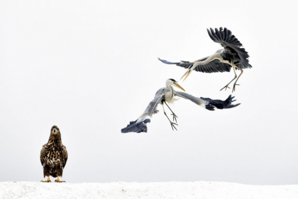 nhung buc anh national geographic nature photographer of the year anh8