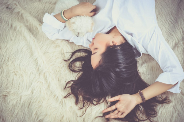 bed cute dog 206396 1024x681