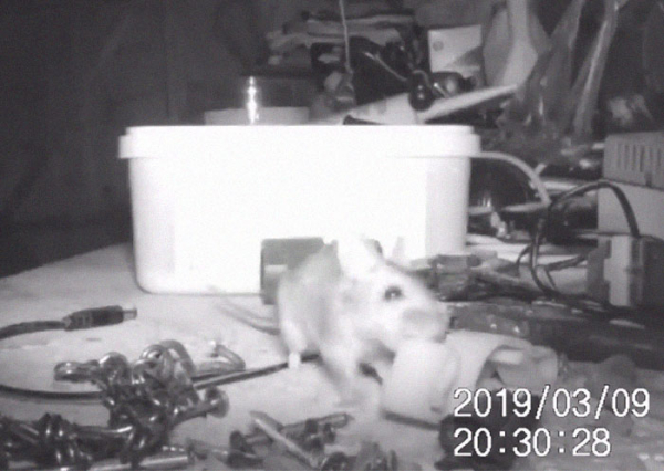 mouse tidying garden shed night pensioner discovered stephen mckears 7 5c91f53732105 700