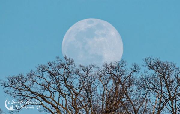 Trong thực tế, mắt thường sẽ không nhận thấy quá rõ sự khác biệt về kích thước cũng như độ sáng của Mặt Trăng khi xảy ra Siêu Mặt Trăng. Để thấy được Mặt Trăng to lớn hơn, người quan sát có thể theo dõi từ khi Mặt Trăng mới mọc, lúc này ảo giác quang học khi so sánh tương quan Mặt Trăng với các tiền cảnh ở chân trời sẽ tạo hình ảnh Mặt Trăng to hơn. Ảnh: Jennifer Rose Lane.