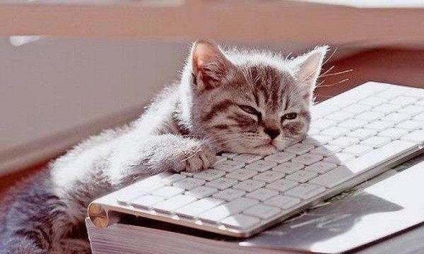 bored cat work 600x384 600x360