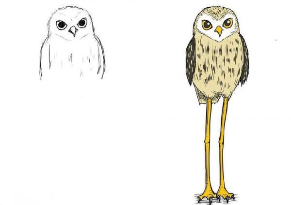 lost bird bo tranh ve dung hoi thuc designer 6