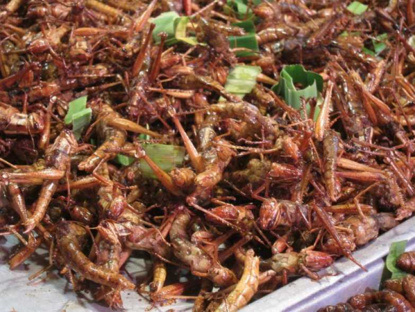 bizarre dishes that are foreign delicacy