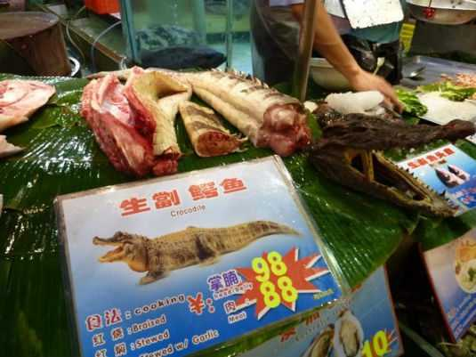 crocodiles australia southeast asia and africa