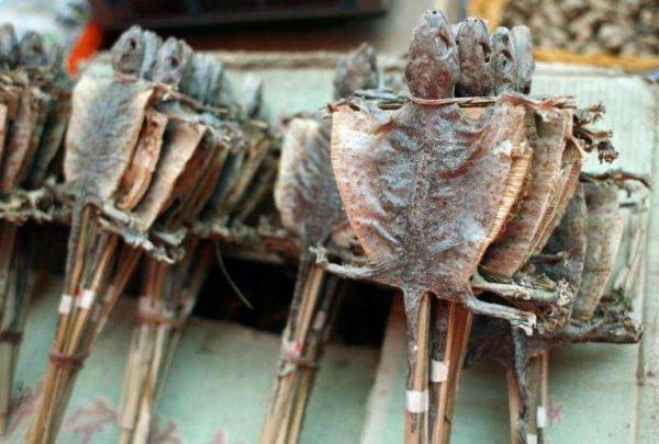 dried lizards