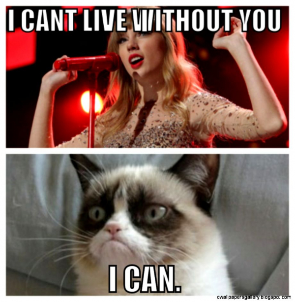 tard the grumpy cat on pinterest grumpy cat grumpy cat meme and