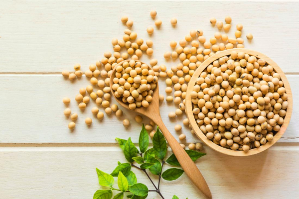 is soy good for you