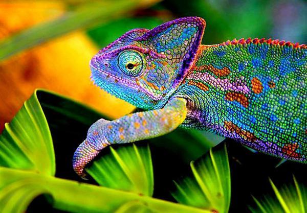 chameleonwebservices dot co dot uk