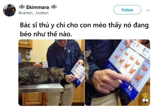 humor animals dogs cats tweets1