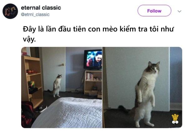 humor animals dogs cats tweets13