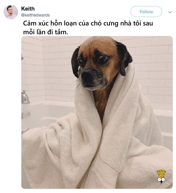 humor animals dogs cats tweets14