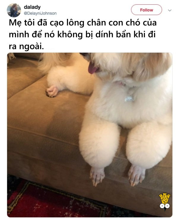 humor animals dogs cats tweets15